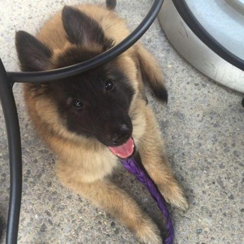 Pet Care Job Kristi Allen's Profile Picture