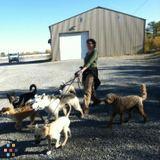 Dog Walker, Pet Sitter in North Bay