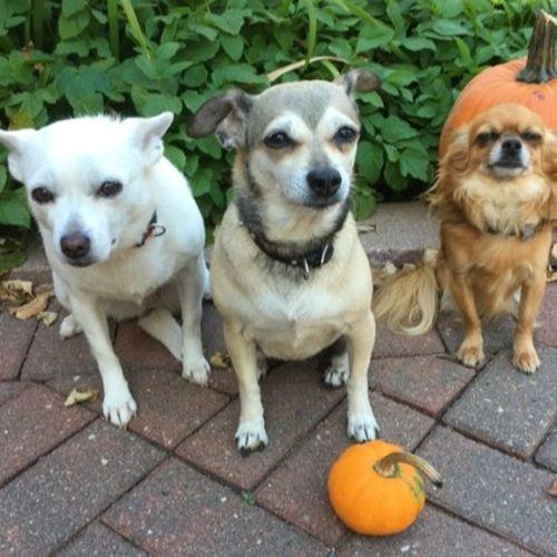 Pet Care Provider Cheryl S's Profile Picture