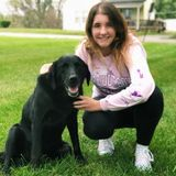 Saint Joseph Dog Sitter Looking For Being Hired