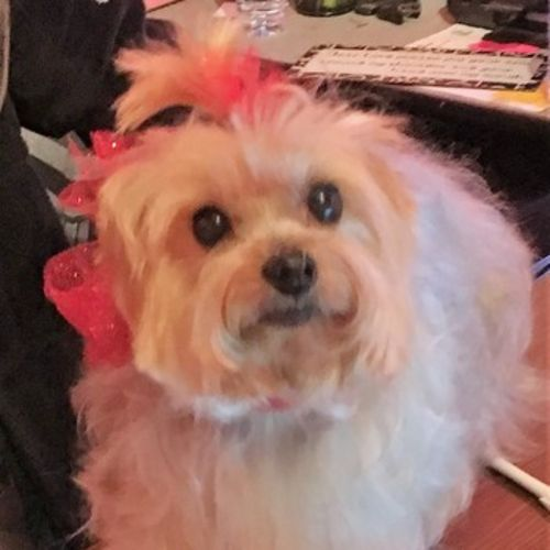 Pet Care Provider Suzie Dickard's Profile Picture