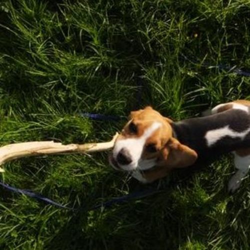 Pet Care Provider Natalie M Gallery Image 2