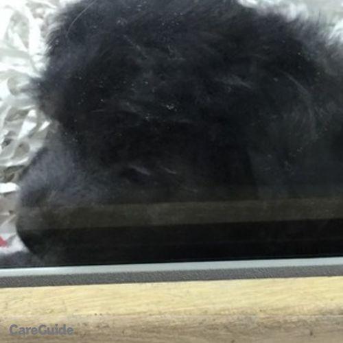 Pet Care Provider Alana P's Profile Picture