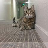 Cat Sitter needed