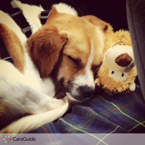 Pet Care Job Christina Modlin's Profile Picture