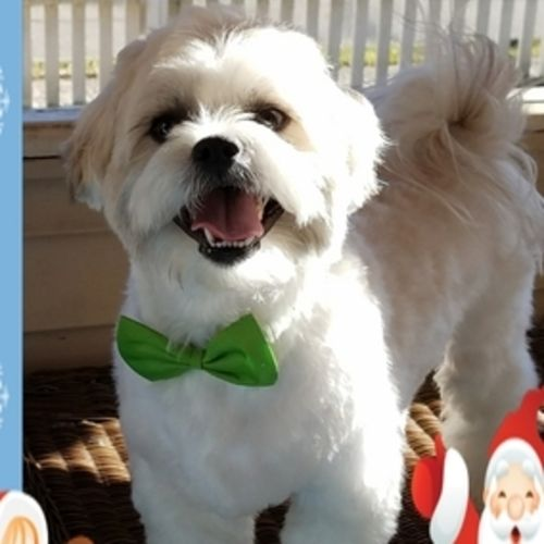 Pet Care Job Judy Cremone's Profile Picture