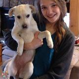 Dog Walker, Pet Sitter in East Stroudsburg