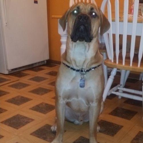Pet Care Job Raquel Johnson's Profile Picture