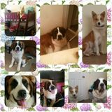Experienced pet care, dog walking even training. All animals welcome. I love them all.