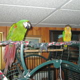 Macaw,Caique and Cat feeding/caring/litterbox few times a year.