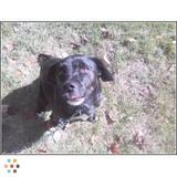 Dog Walker, Pet Sitter in Berkey