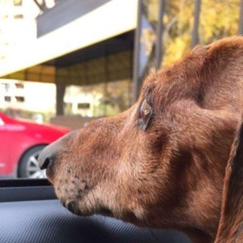 Pet Care Job Allie Gallon's Profile Picture