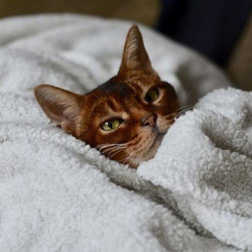 Pet Care Provider Elizabeth M's Profile Picture
