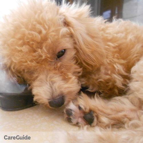 Pet Care Provider Michelle A's Profile Picture
