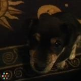 Dog Walker, Pet Sitter in Statesville