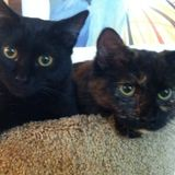 Available: Dedicated Cat Sitting Professional in Denton, Maryland