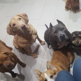 Dog Walker, Pet Sitter in Daly City