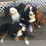 Dog Walker, Pet Sitter in Westford