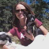 Kind and responsible Pet lover in Lakewood, Colorado