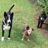 Dog Walker Job, Pet Sitter Job in Metairie
