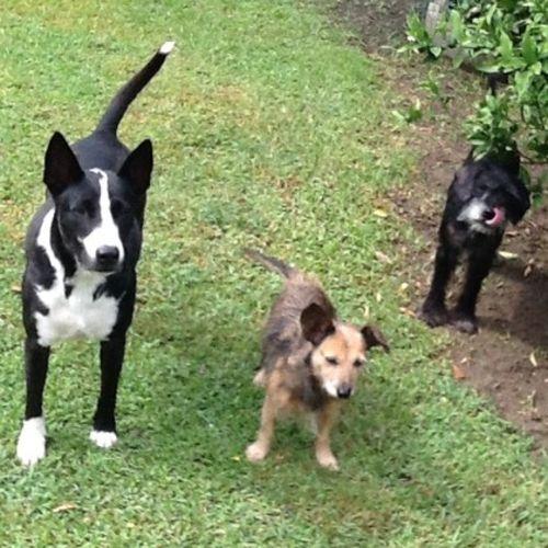 Pet Care Job Homeward Bound's Profile Picture