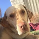 Interviewing a Disciplined Dog Sitting Professional in Dickinson, North Dakota