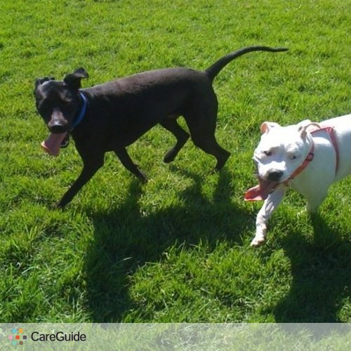Dog Walker, Pet Sitter in Foothill Ranch