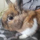 Rabbit Pet Care Provider in Miami