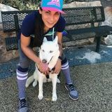 Honest Animal Caregiver
