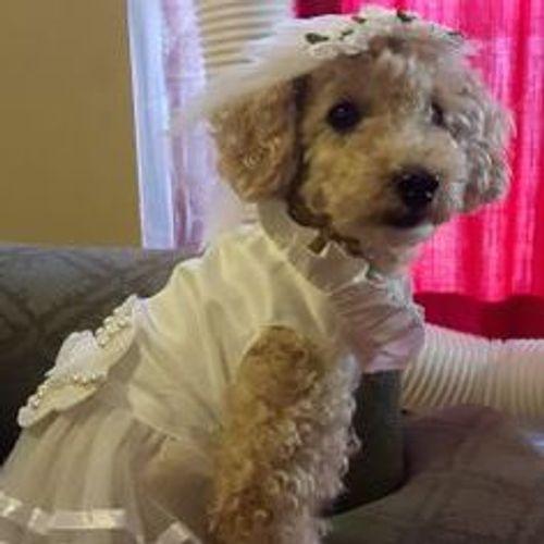 Pet Care Provider Erica A's Profile Picture