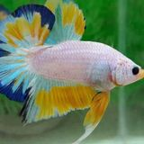 I have serious knowledge &experience in keeping, treating and breeding of Fish, Birds,dogs