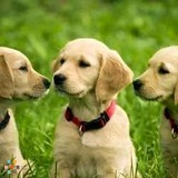 Dog Walker, Pet Sitter, Kennel in Ann Arbor