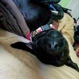 Dog Walker, Pet Sitter in Shady Side