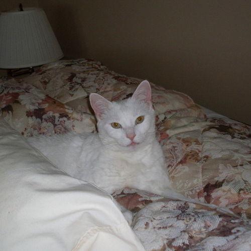 Pet Care Job Janice W's Profile Picture
