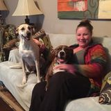 Lee House and Pet Sitter Seeking Being Hired in Florida