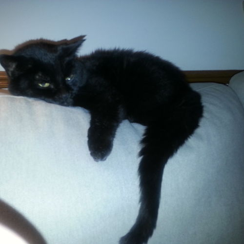 Pet Care Job Hanne Horney's Profile Picture