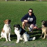 Dog Walker, Pet Sitter in Brielle