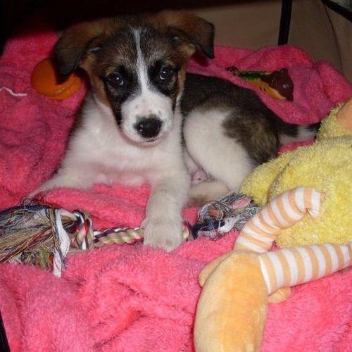 Pet Care Provider Emma Bon's Profile Picture