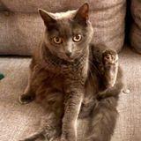 Cat Sitter in Santa Monica needed second week in April
