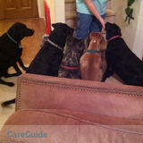 Dog Walker, Pet Sitter in Haltom City