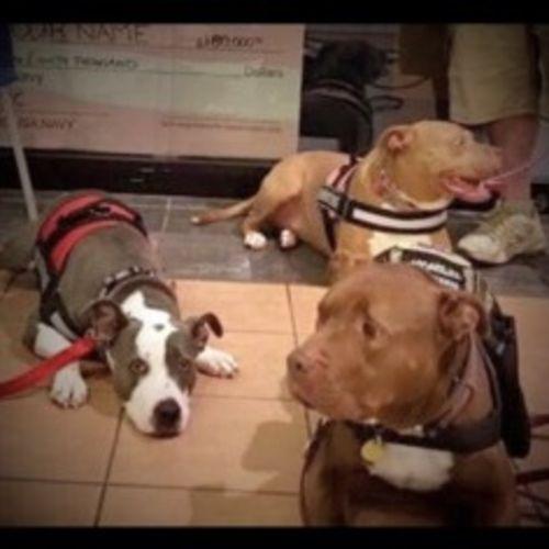 Pet Care Job Sheila B Gallery Image 1
