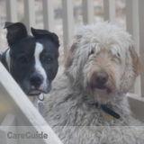 Dog Walker Job, Pet Sitter Job in Peyton