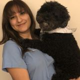 Dog walking, grooming, medication administration, pet sitting, all offered in South Side of Chicago
