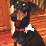 Dog Walker Job, Pet Sitter Job in Lincoln