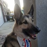 Dog Walking/ Training/ Sitting for a reasonable charge with a reliable source