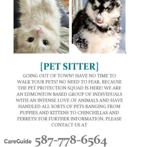 meticulous pet sitter walker   dog walker pet sitter in edmonton