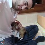 Dog Walker, Pet Sitter in Califon