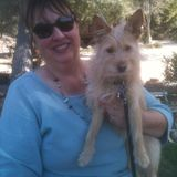 Skillful Cat and Dog Sitting Professional in Ventura