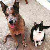 Dog Walker, Pet Sitter in Lawrenceville