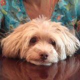 Dog Walker, Pet Sitter in Beaver